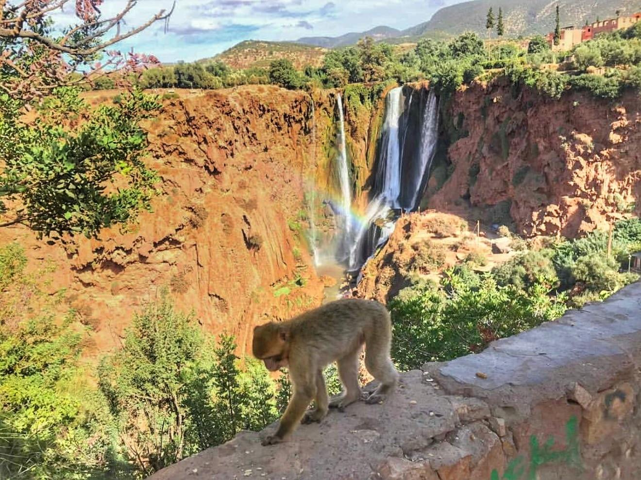 ouzoud monkeys, ouzoud morocco, majmuni na vodopadima, vodopadi ouzoud maroko